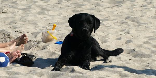 Unblocked Online Dating